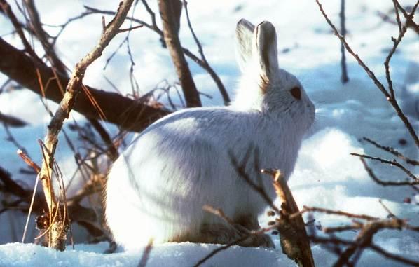 Животные-Татарстана-Описание-названия-и-особенности-животных-Татарстана-37