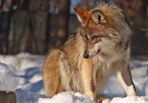 Животные-Татарстана-Описание-названия-и-особенности-животных-Татарстана-5