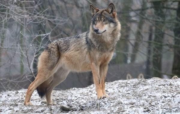 Животные-Татарстана-Описание-названия-и-особенности-животных-Татарстана-6