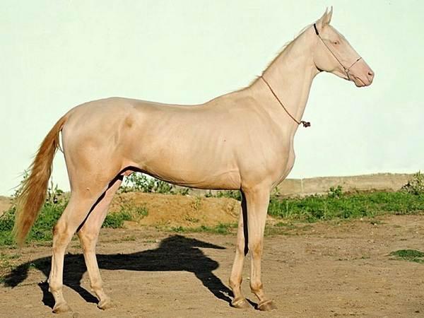 Масти-лошадей-Описание-особенности-и-названия-мастей-лошадей-18