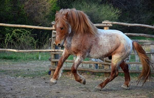 Масти-лошадей-Описание-особенности-и-названия-мастей-лошадей-28