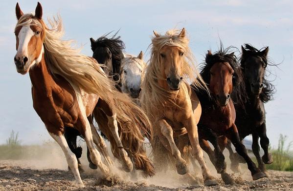 Масти-лошадей-Описание-особенности-и-названия-мастей-лошадей-35