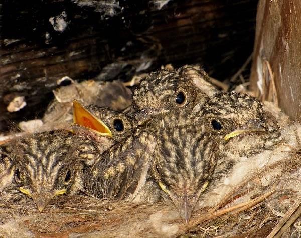 Мухоловка-птица-Описание-особенности-образ-жизни-и-среда-обитания-мухоловки-12