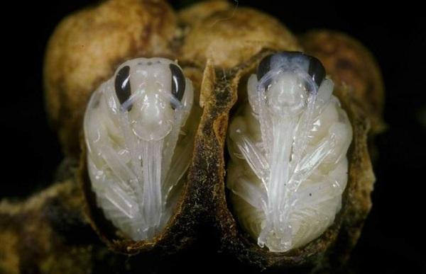 Шмель-насекомое-Описание-особенности-образ-жизни-и-среда-обитания-шмеля-27