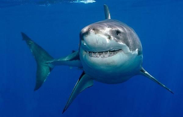 Хищные-рыбы-Названия-описания-и-особенности-хищных-рыб-27
