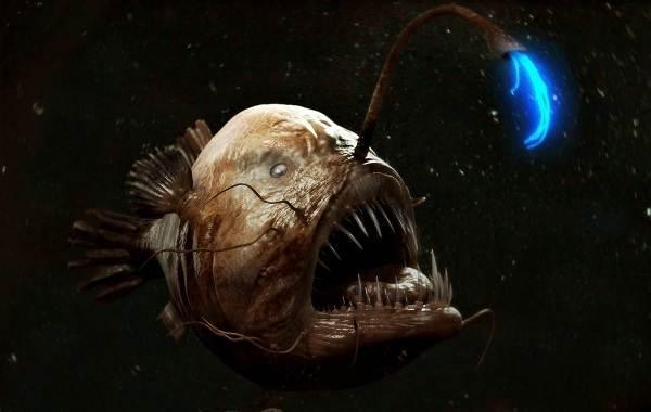 Хищные-рыбы-Названия-описания-и-особенности-хищных-рыб-32