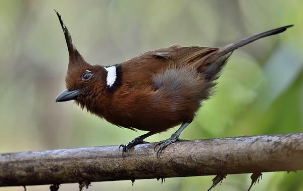 Сойка-птица-Описание-особенности-виды-и-среда-обитания-птицы-сойки-8