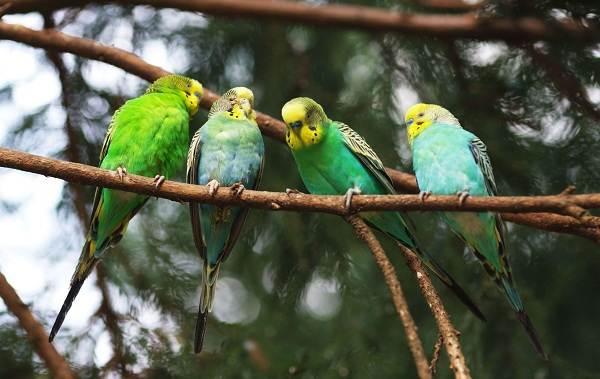Виды-попугаев-Описания-названия-и-особенности-видов-попугаев-1