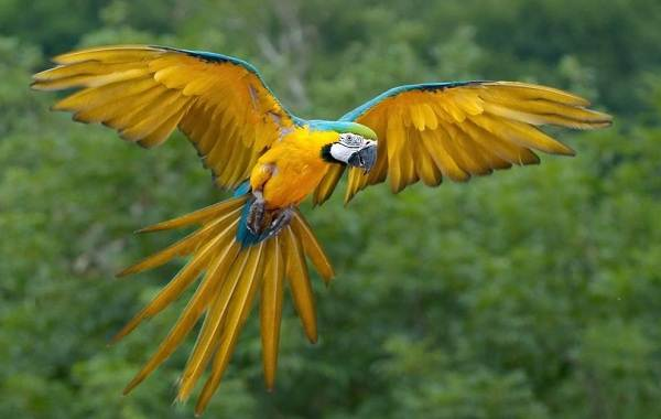 Виды-попугаев-Описания-названия-и-особенности-видов-попугаев-10
