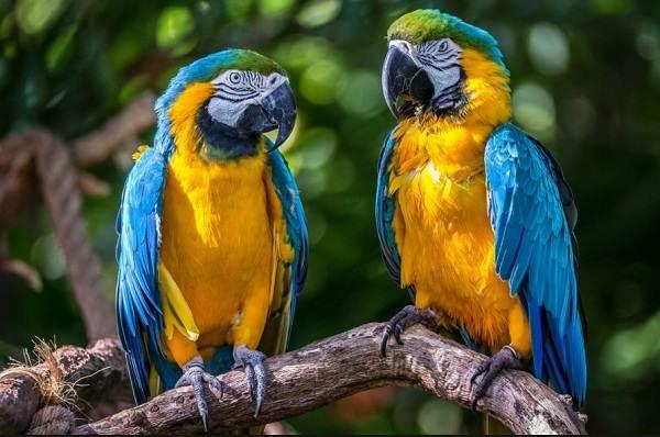 Виды-попугаев-Описания-названия-и-особенности-видов-попугаев-11