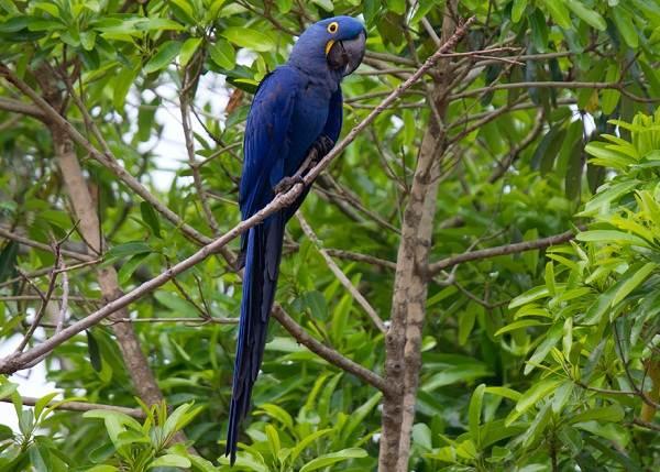 Виды-попугаев-Описания-названия-и-особенности-видов-попугаев-12