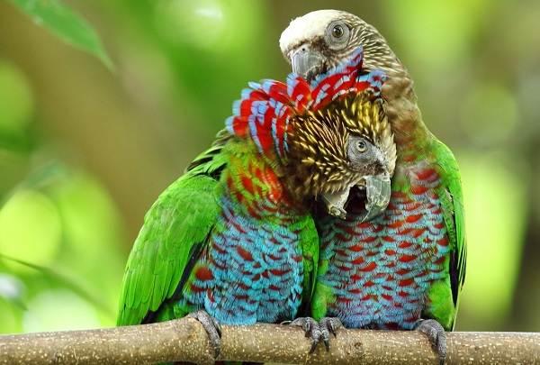 Виды-попугаев-Описания-названия-и-особенности-видов-попугаев-17