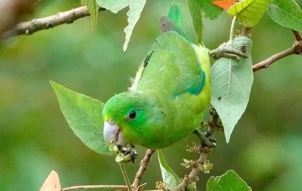 Виды-попугаев-Описания-названия-и-особенности-видов-попугаев-22