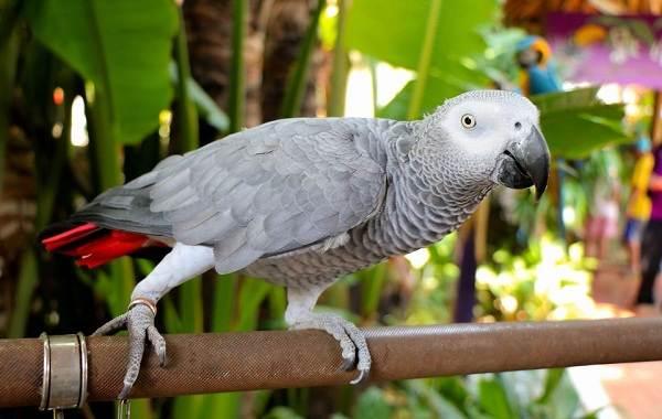 Виды-попугаев-Описания-названия-и-особенности-видов-попугаев-24