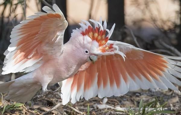 Виды-попугаев-Описания-названия-и-особенности-видов-попугаев-27