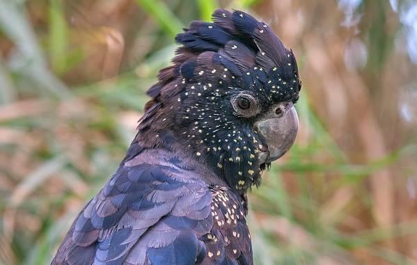 Виды-попугаев-Описания-названия-и-особенности-видов-попугаев-28