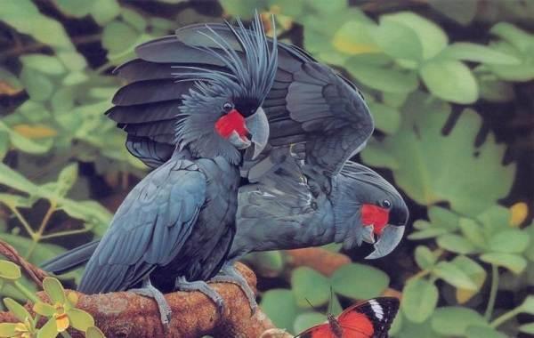 Виды-попугаев-Описания-названия-и-особенности-видов-попугаев-29