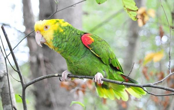 Виды-попугаев-Описания-названия-и-особенности-видов-попугаев-3