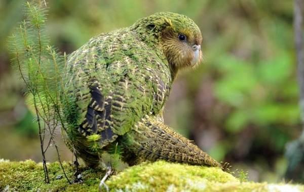 Виды-попугаев-Описания-названия-и-особенности-видов-попугаев-30