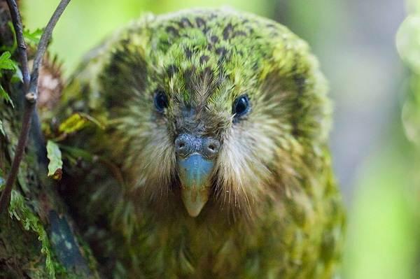 Виды-попугаев-Описания-названия-и-особенности-видов-попугаев-32