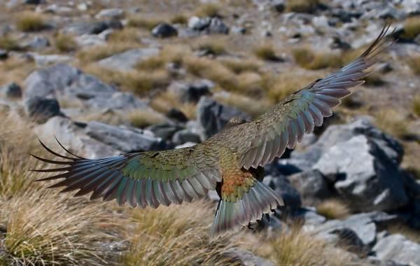 Виды-попугаев-Описания-названия-и-особенности-видов-попугаев-35