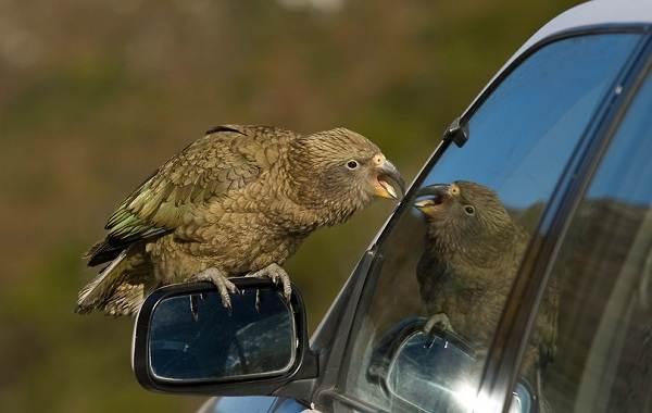Виды-попугаев-Описания-названия-и-особенности-видов-попугаев-36