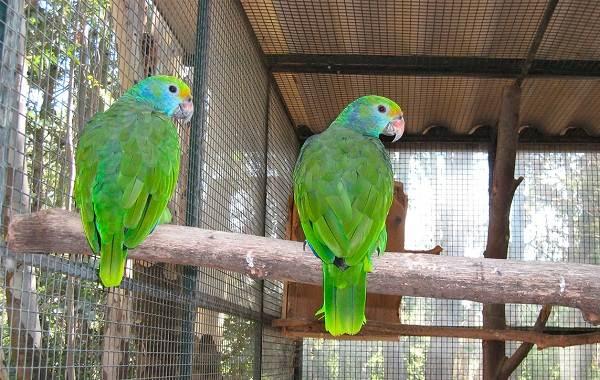 Виды-попугаев-Описания-названия-и-особенности-видов-попугаев-4