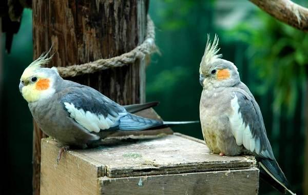 Виды-попугаев-Описания-названия-и-особенности-видов-попугаев-44