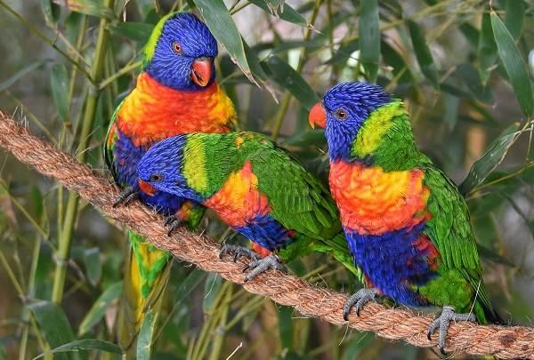 Виды-попугаев-Описания-названия-и-особенности-видов-попугаев-46