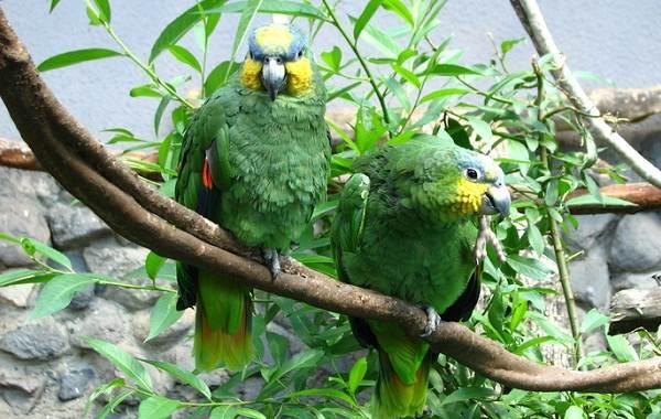 Виды-попугаев-Описания-названия-и-особенности-видов-попугаев-5