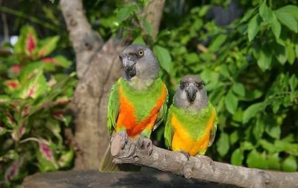 Виды-попугаев-Описания-названия-и-особенности-видов-попугаев-55
