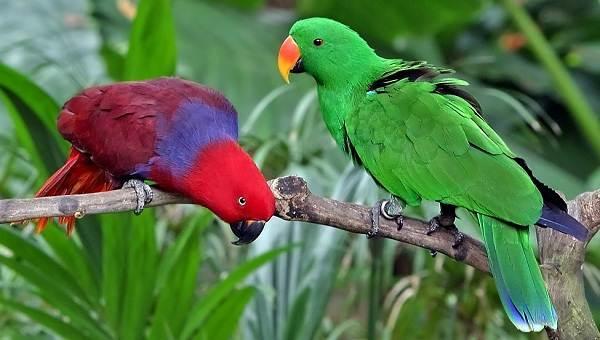 Виды-попугаев-Описания-названия-и-особенности-видов-попугаев-58