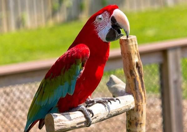Виды-попугаев-Описания-названия-и-особенности-видов-попугаев-8
