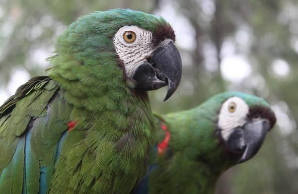 Виды-попугаев-Описания-названия-и-особенности-видов-попугаев-9