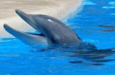 Дельфин Афалина — его образ жизни и среда обитания
