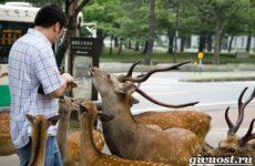 Животные Японии. Описание, названия и особенности животных Японии