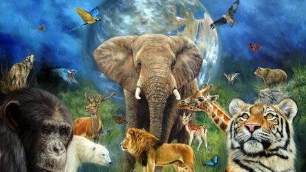 Животные Африки. Описание и названия животных Африки