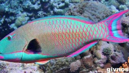 Рыба попугай. Описание, особенности, виды и уход за рыбой попугай