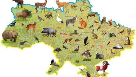 Животные Украины. Описание, названия и особенности животных Украины