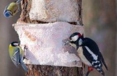 Птицы Подмосковья. Названия, описания и особенности птиц Подмосковья