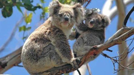 Животные Австралии. Описание, названия и особенности животных Австралии