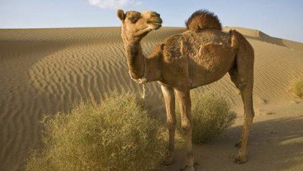 Животные пустыни. Описания, названия и особенности животных пустыни