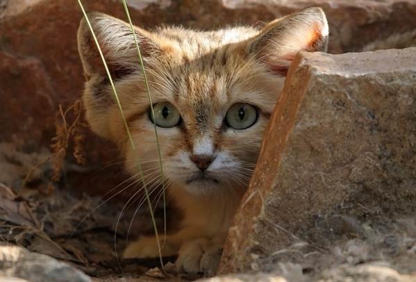 Животные-пустыни-Описания-названия-и-особенности-животных-пустыни-15