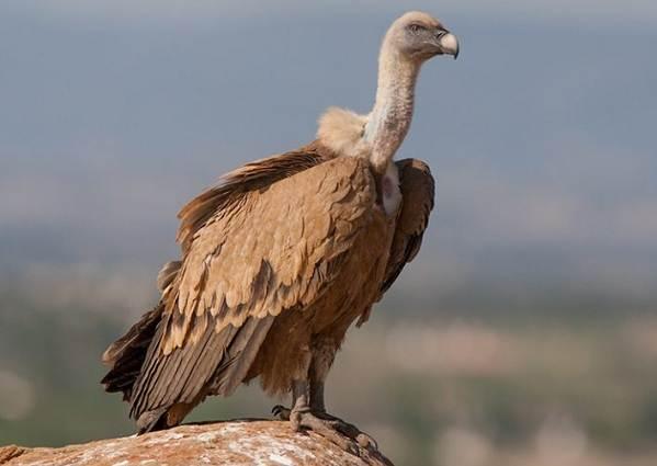 Животные-пустыни-Описания-названия-и-особенности-животных-пустыни-29