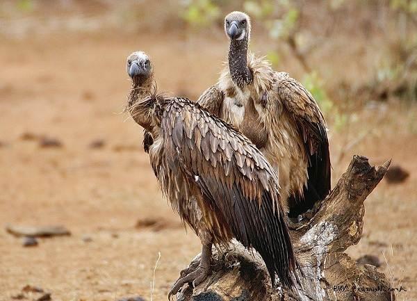 Животные-пустыни-Описания-названия-и-особенности-животных-пустыни-30
