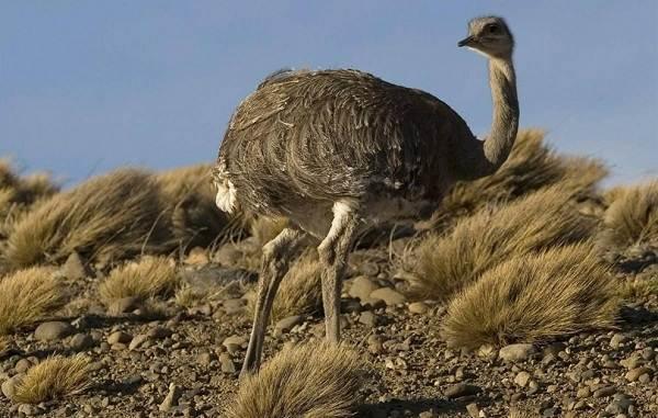 Животные-пустыни-Описания-названия-и-особенности-животных-пустыни-32
