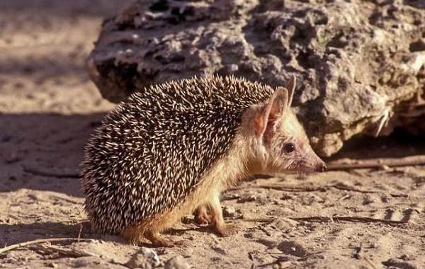 Животные-пустыни-Описания-названия-и-особенности-животных-пустыни-6