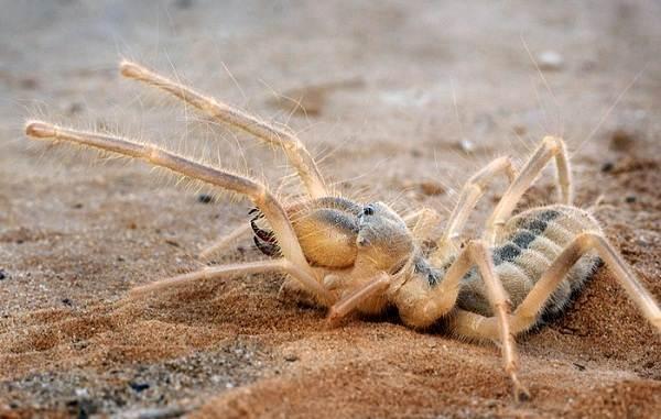 Все животные пустыни