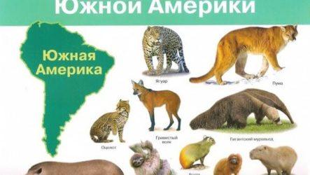 Животные Южной Америки. Описание, названия и виды животных Южной Америки
