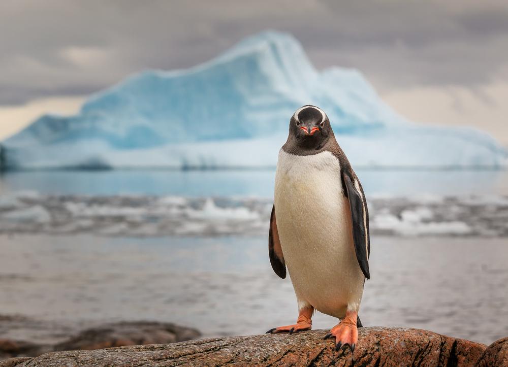 Животные-Антарктиды-Описание-и-особенности-животных-Антарктиды-51